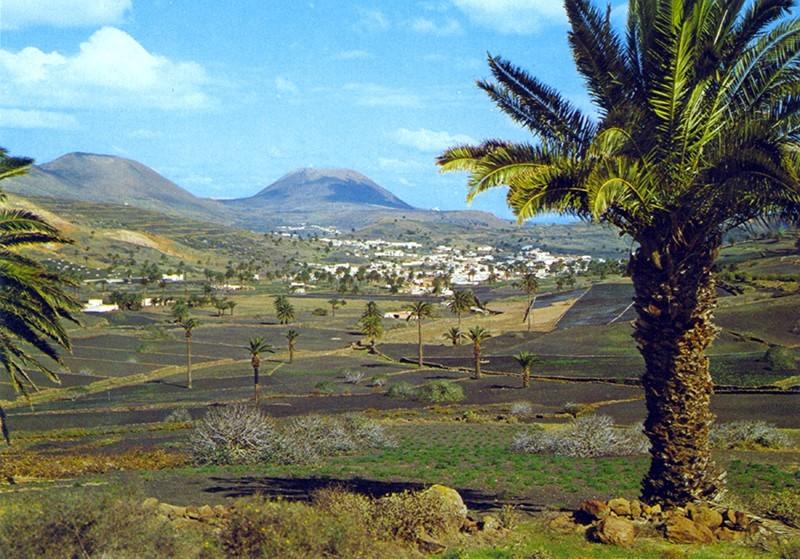 Palmeral de Haría