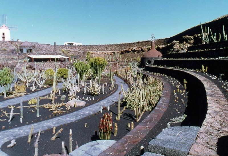 Jardín de Cactus IV