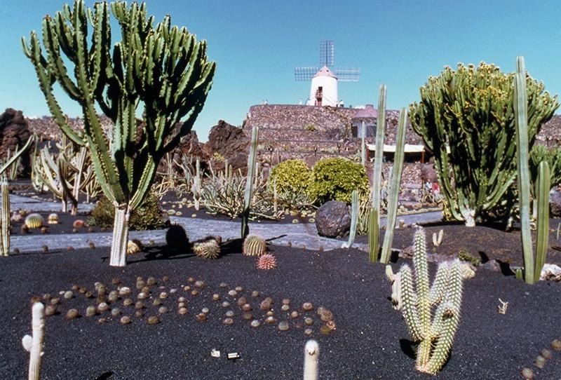 Jardín de Cactus V