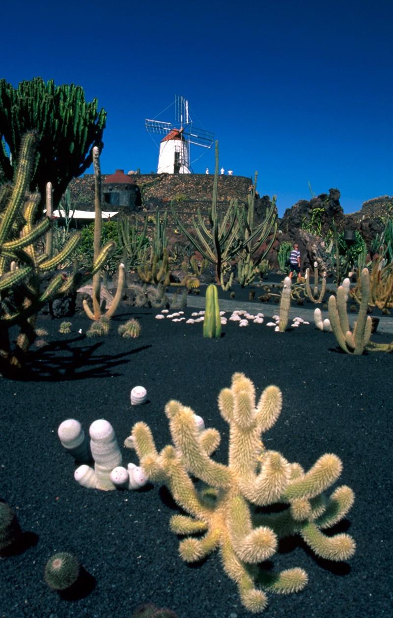 Jardín de Cactus VI