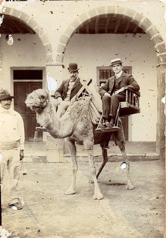 Señores montados en el camello II