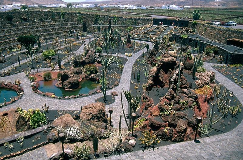 Jardín de Cactus III