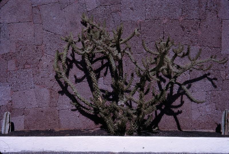 Cactus del Parque Municipal
