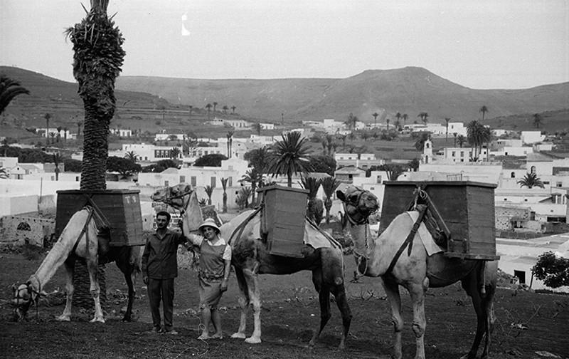 Camellada en Haría I