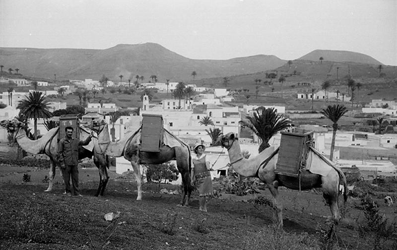 Camellada en Haría II