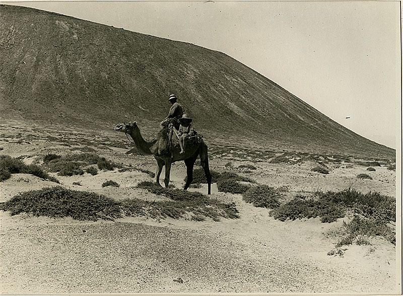 Gracioseros en camello