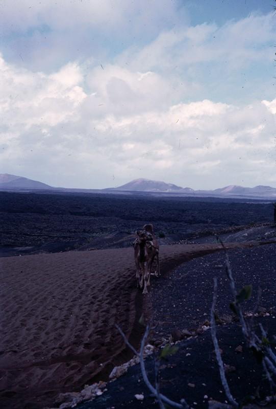 Agricultor con camello I