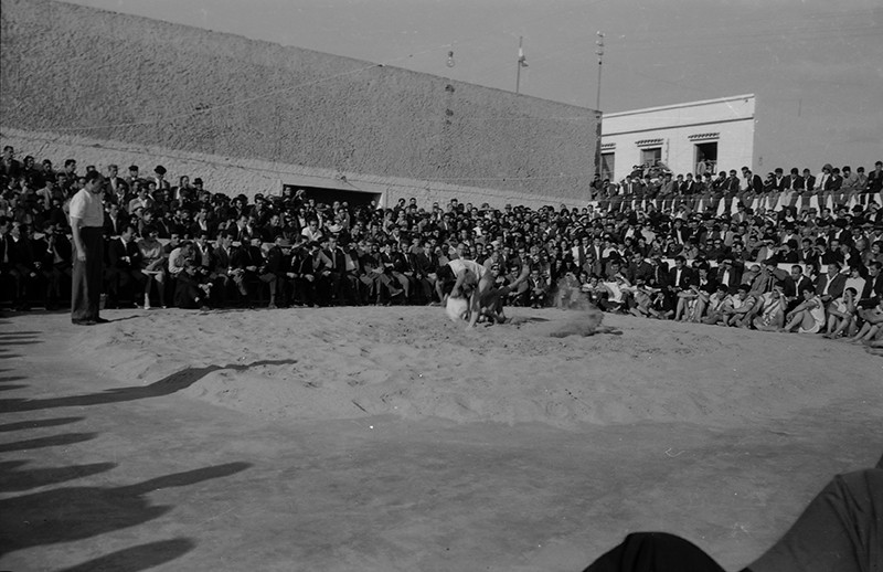 Luchada en Maguez IV
