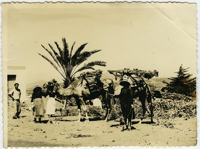Campesinos cargando un camello II