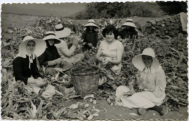 Mujeres recogiendo piñas II