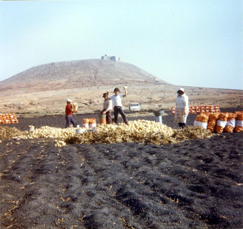 Familia Camacho Díaz cortando cebollas I