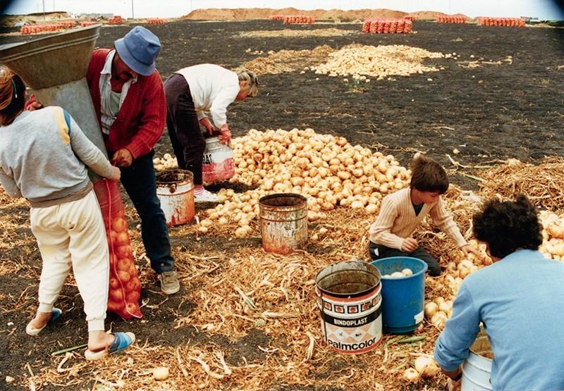 Familia Camacho Díaz cortando cebollas II