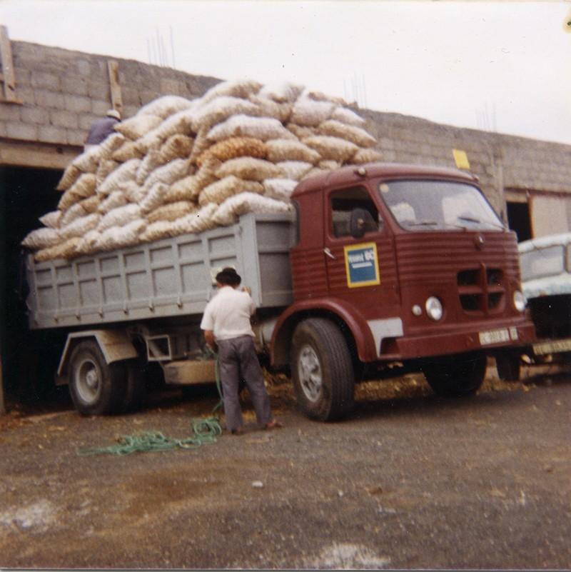 Camión cargado de cebollas