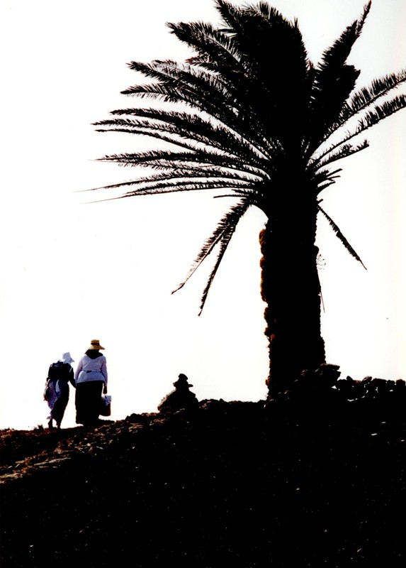 Fiestas de Las Nieves 2001 I