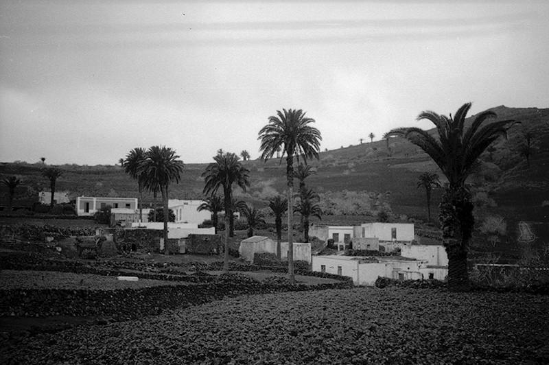 Plantación de papas en Haría