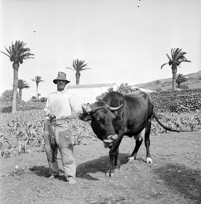 Campesino con vaca