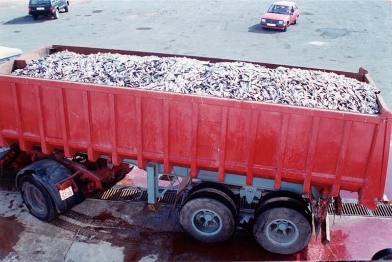 Camión con sardinas I