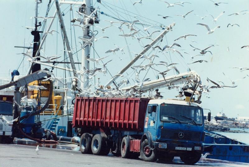 Camión con sardinas II