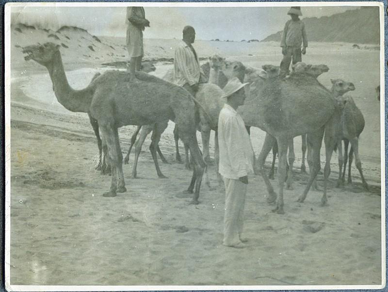 Camellos en La Graciosa
