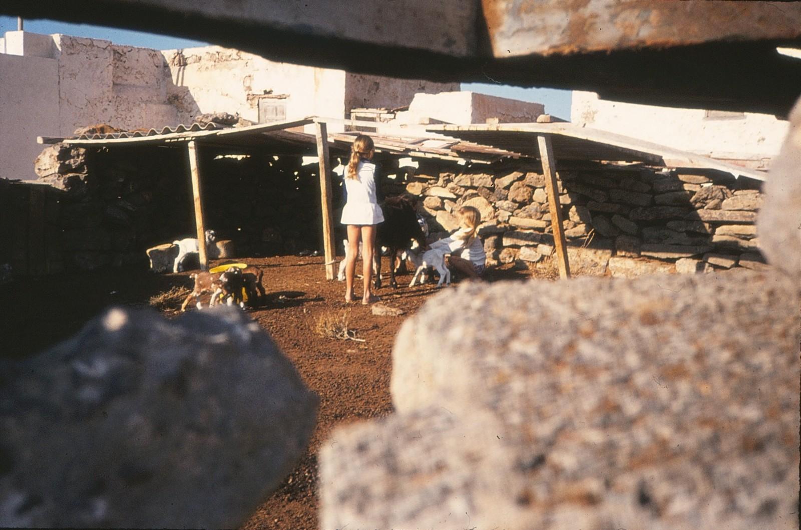 Cabras en La Caleta II