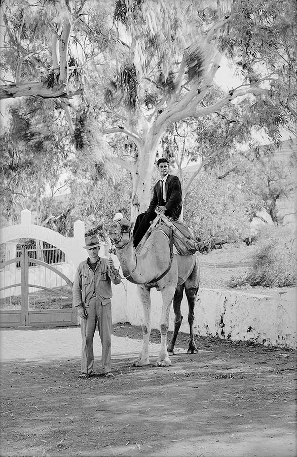 Camellero de Haría