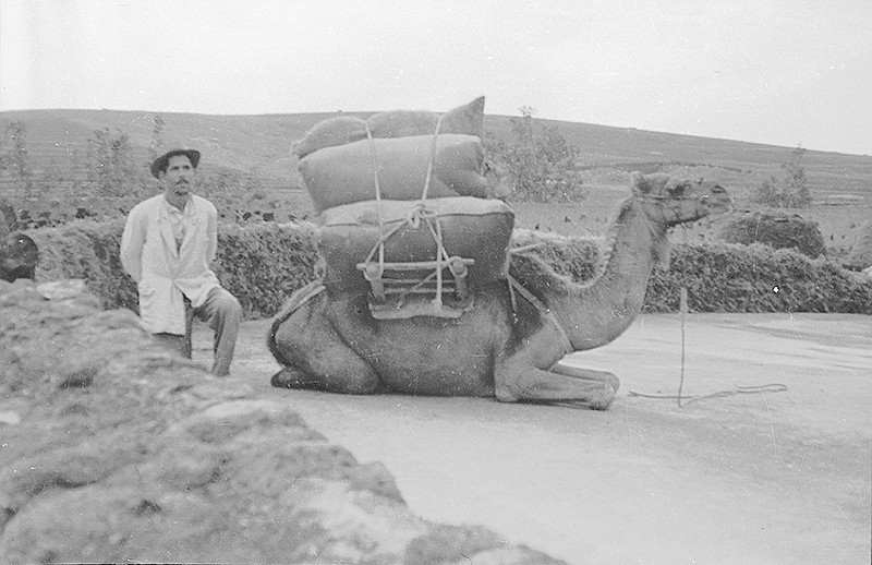 Campesino con camello I