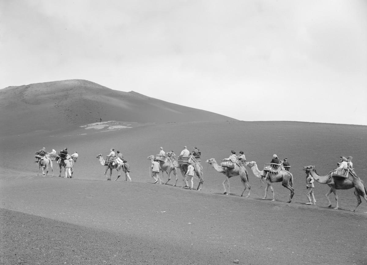 Camellos en las Montañas del Fuego