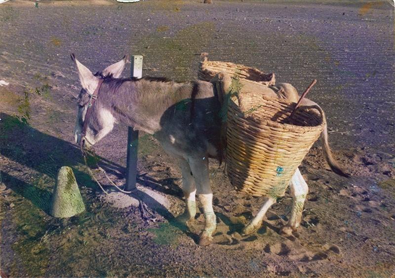 Burro con cestas