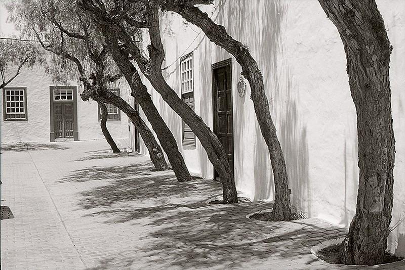 Calle Los Árboles