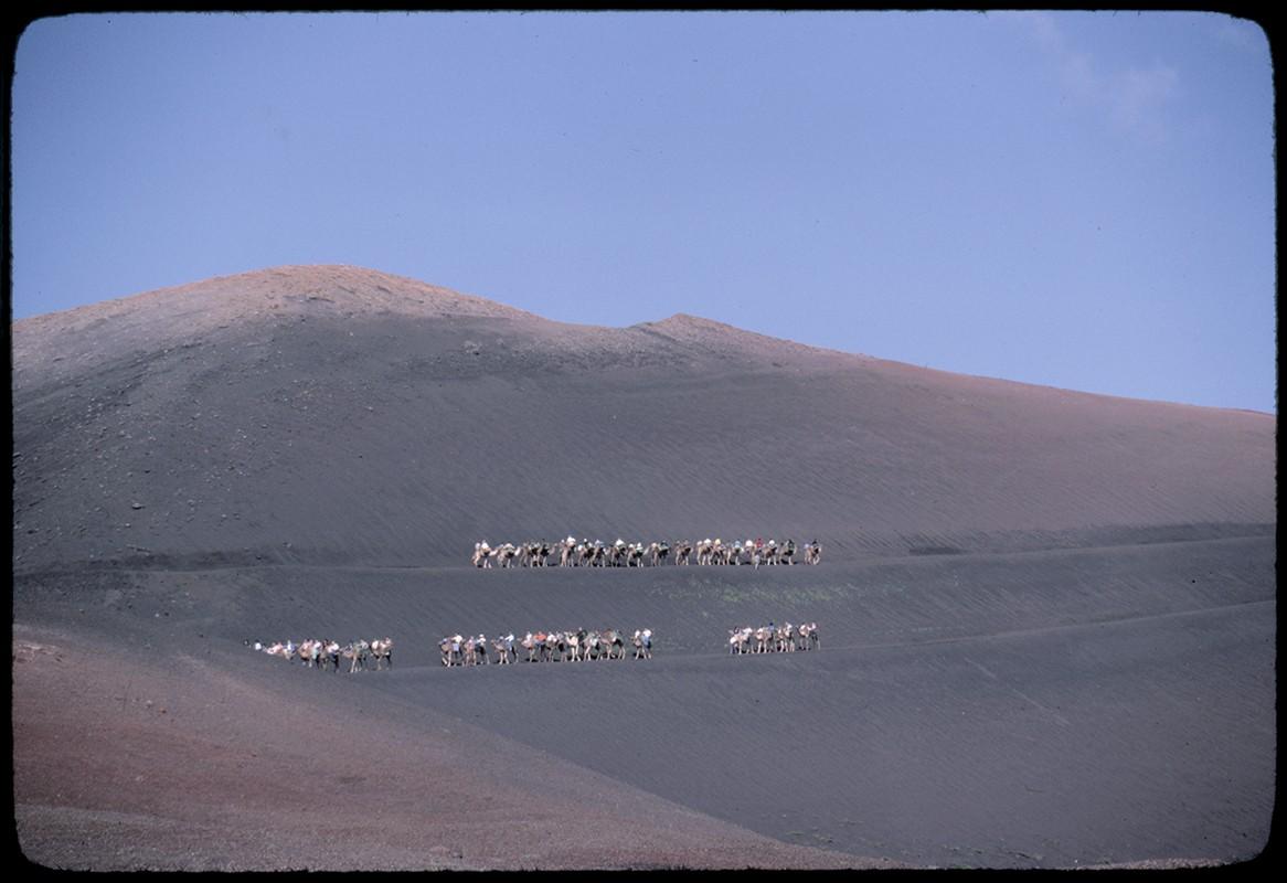 Ruta de camellos en Timanfaya I