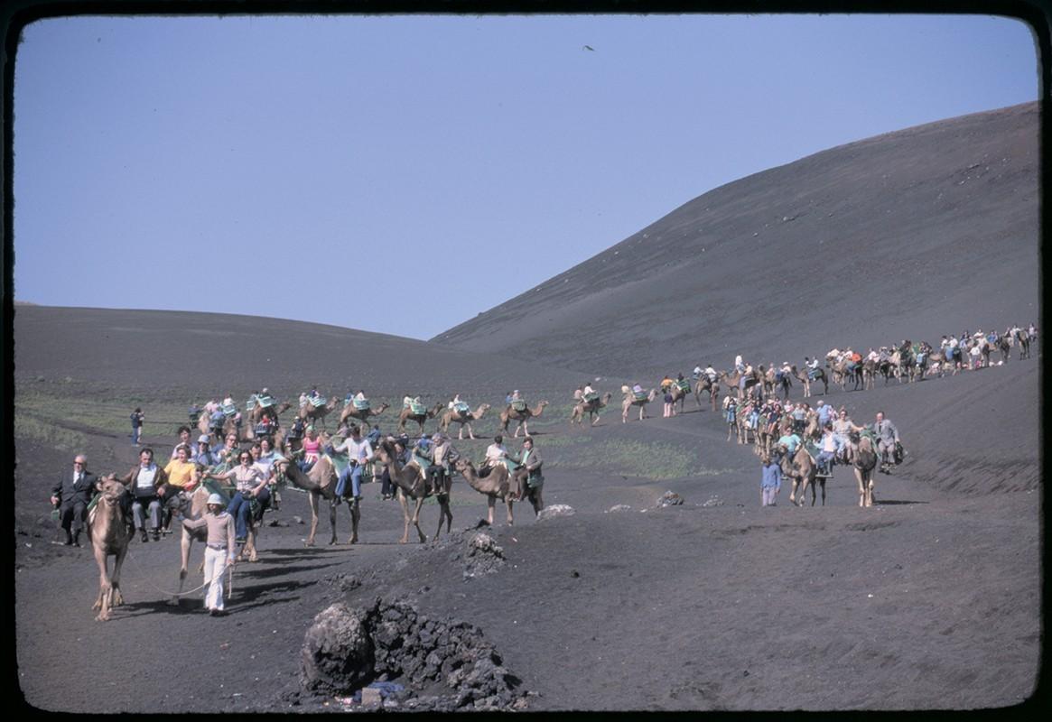 Ruta de camellos en Timanfaya II