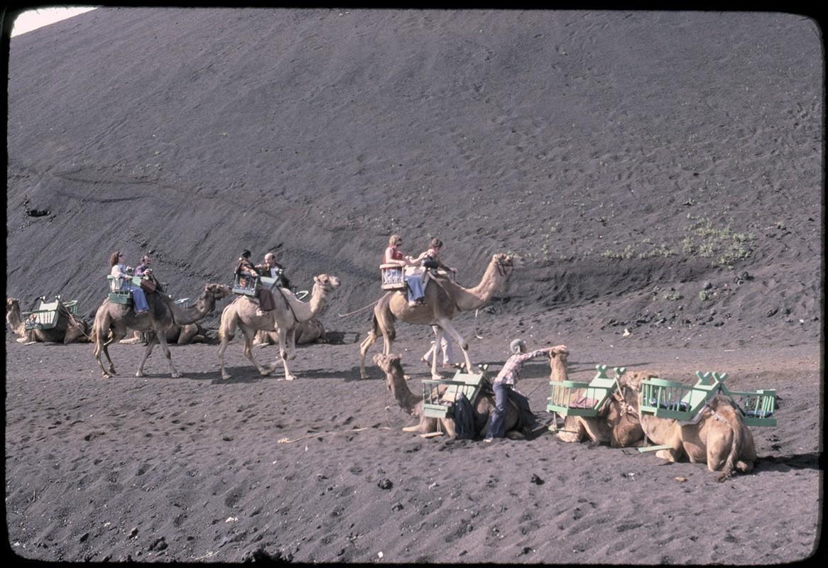 Ruta de camellos en Timanfaya III