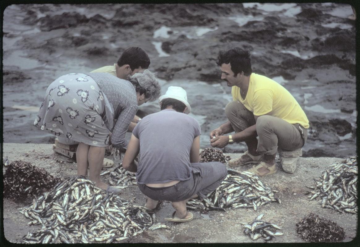 Reparto de pescado I