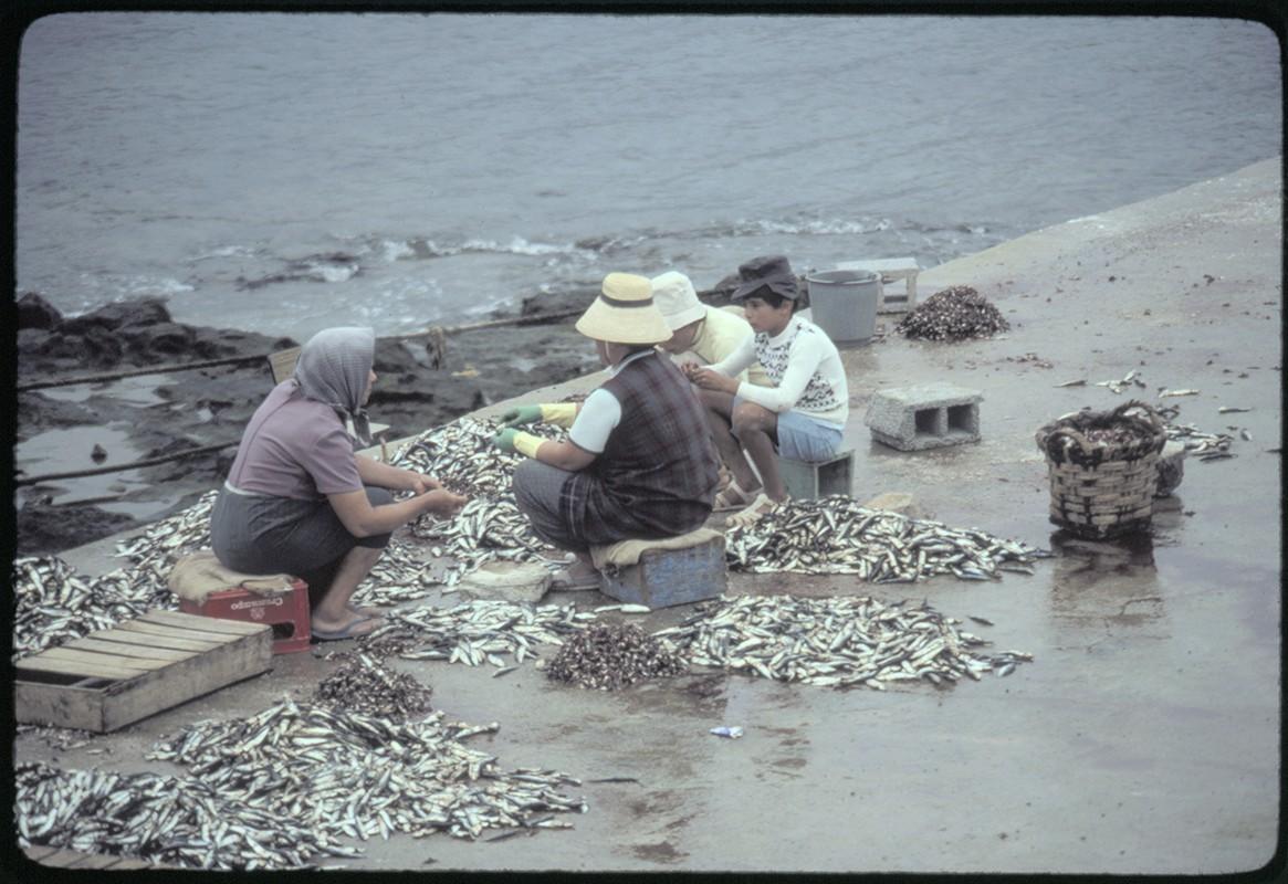 Reparto de pescado III