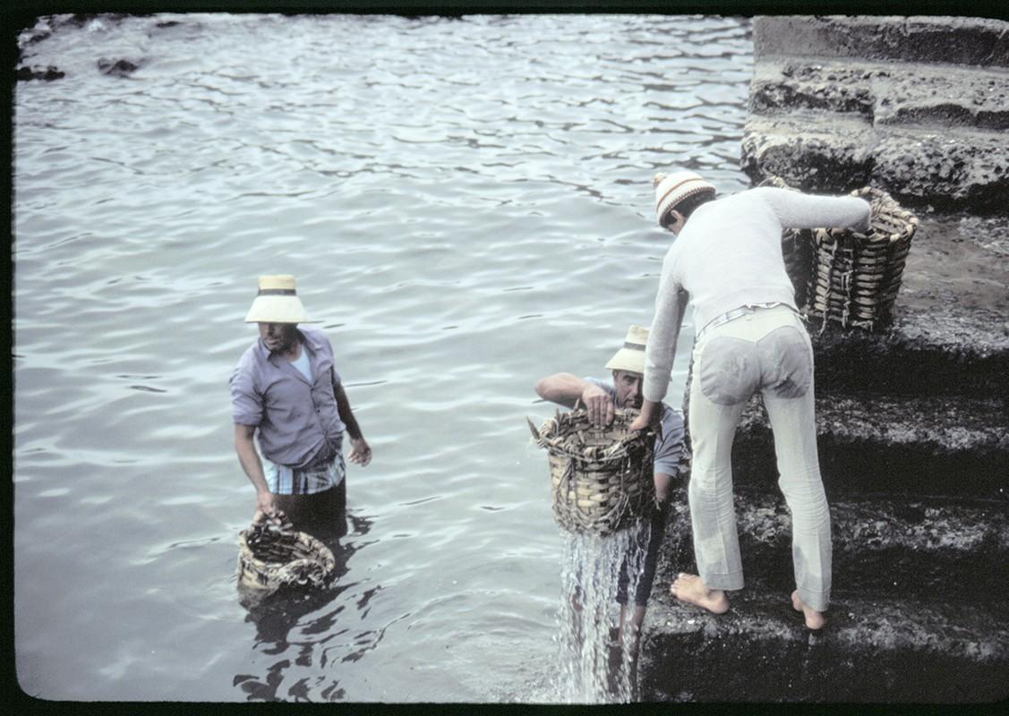 Reparto de pescado IV