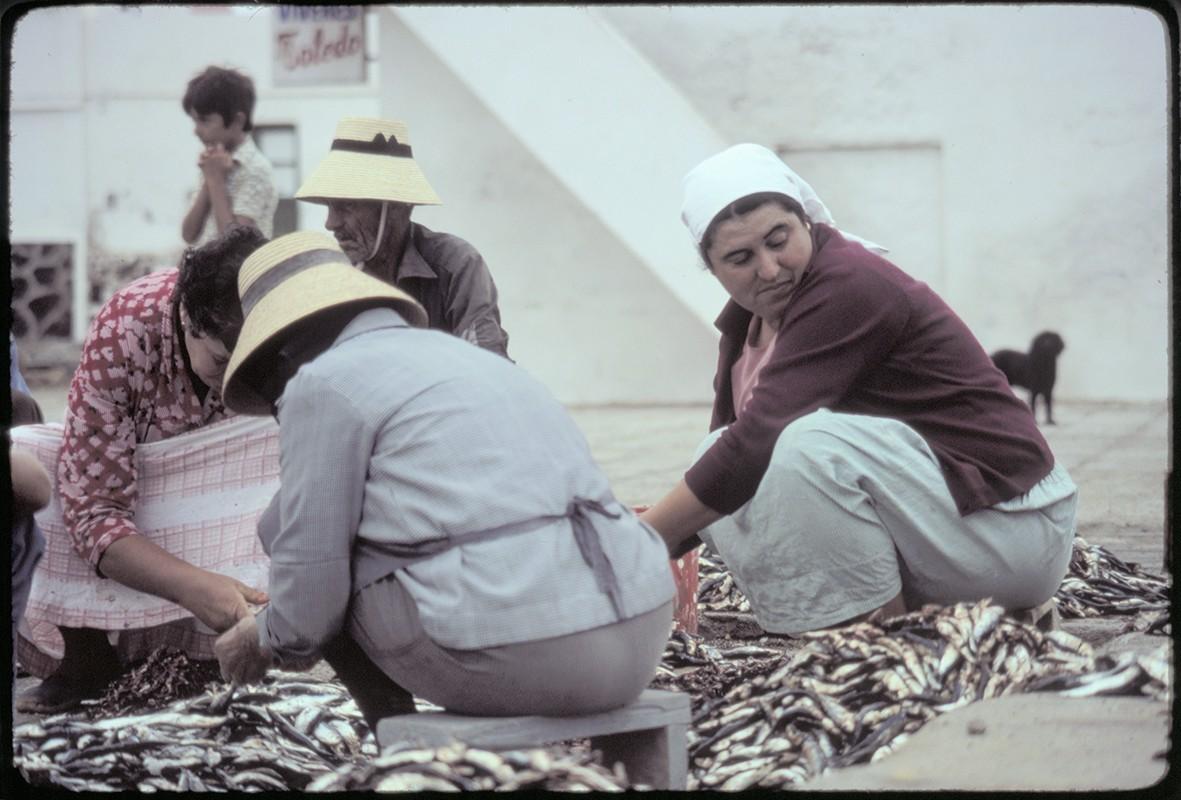 Reparto de pescado VI