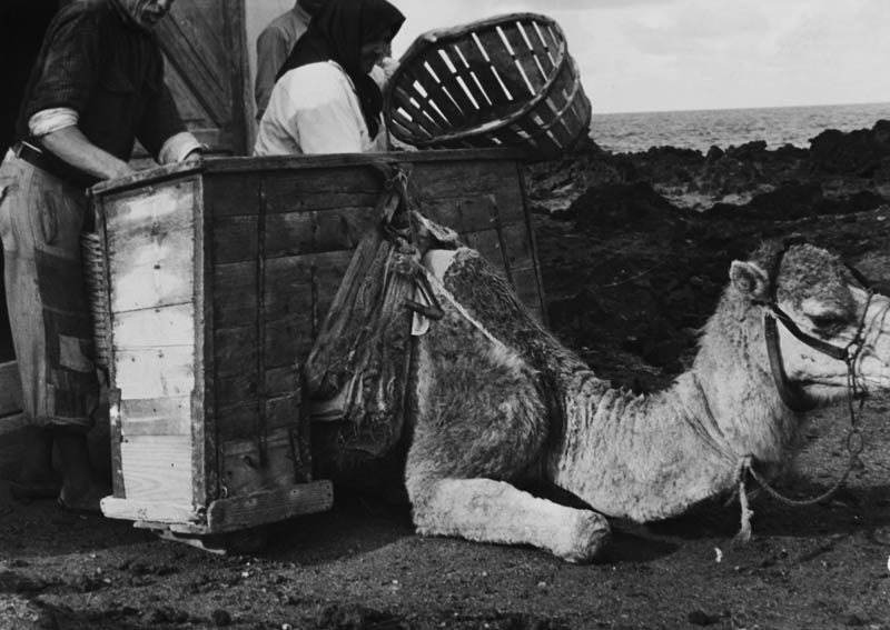 Transporte de cebolla