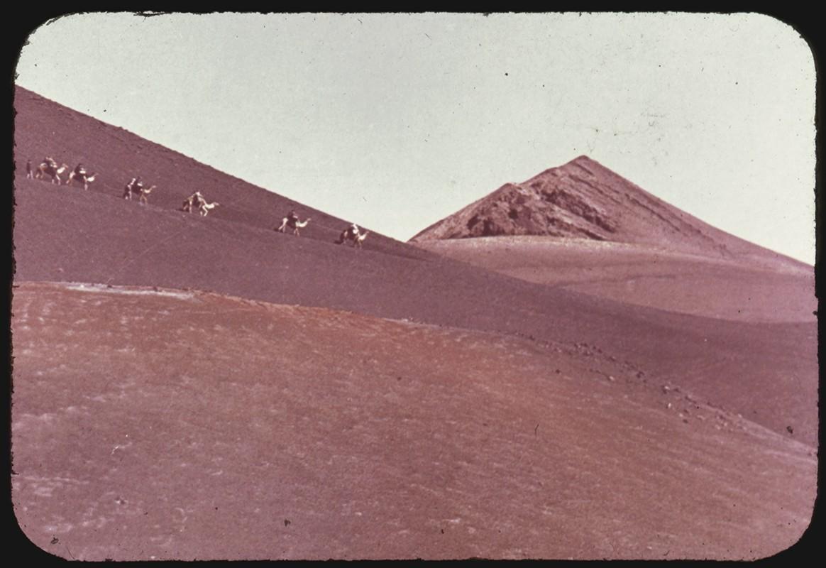 Camellos por Timanfaya I