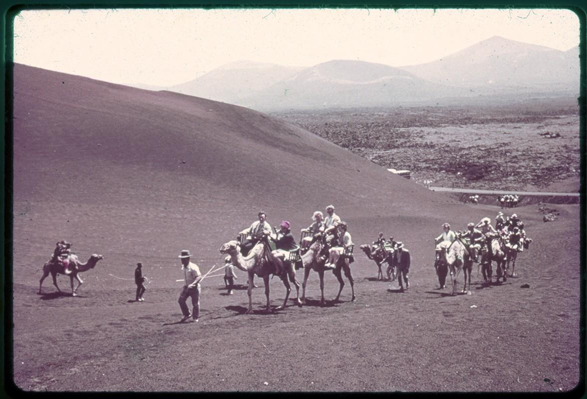 Camellos por Timanfaya III
