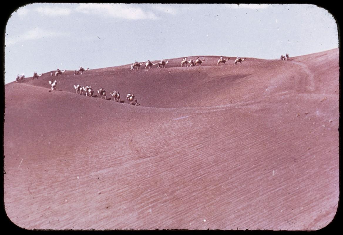 Camellos por Timanfaya II