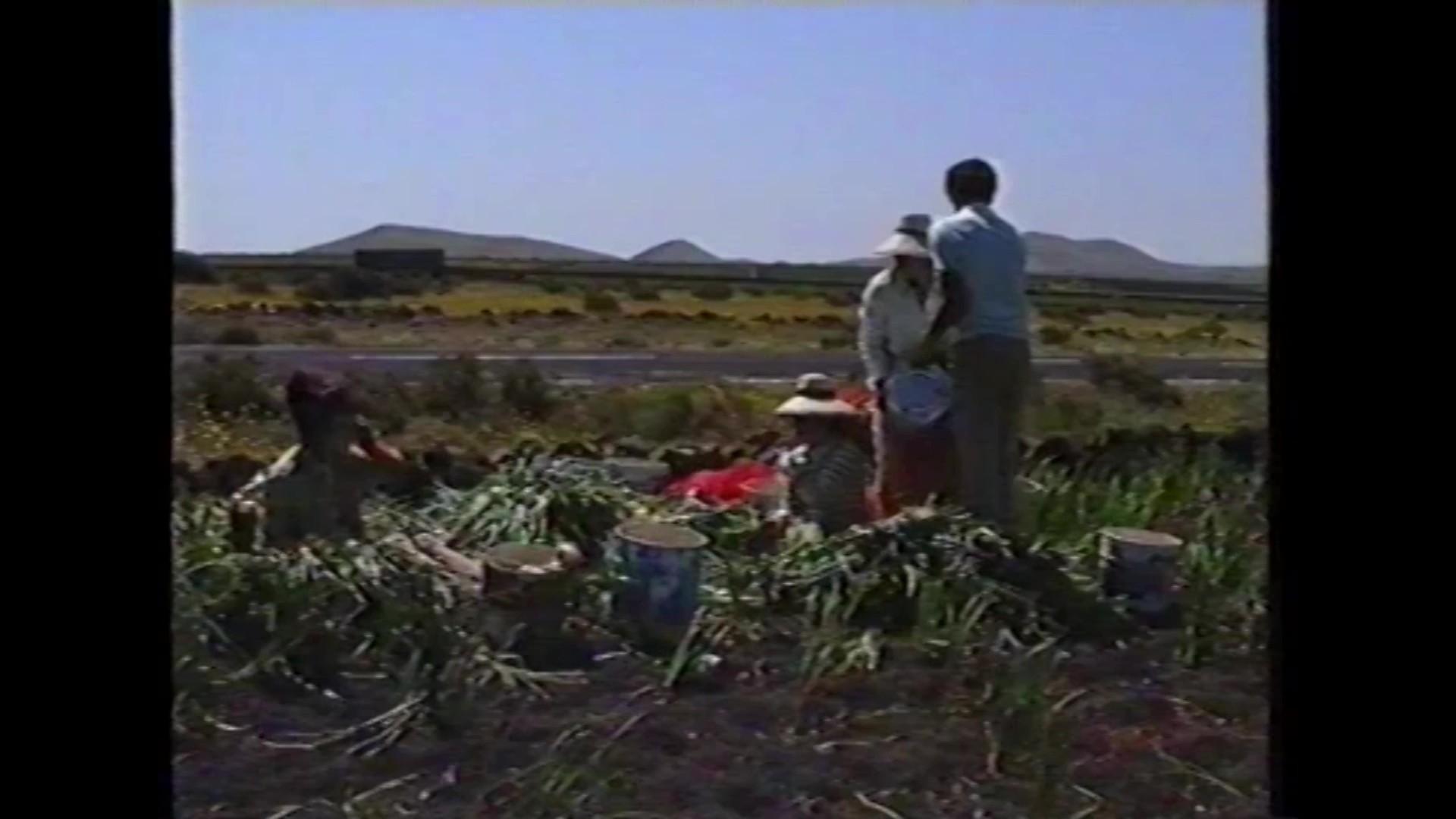 Agricultura en 'Lanzarote. Isla de los Volcanes' (1990)