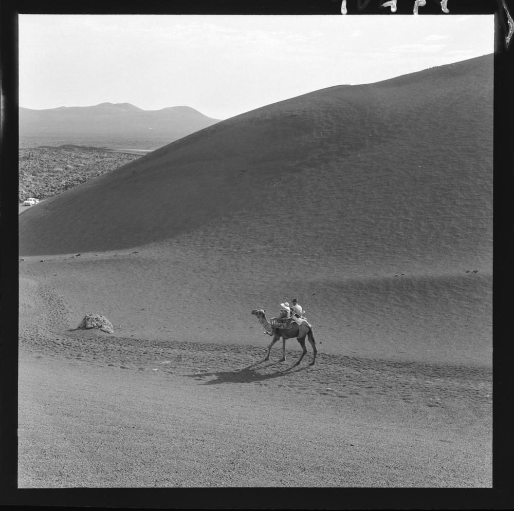 Campesinos en camello II