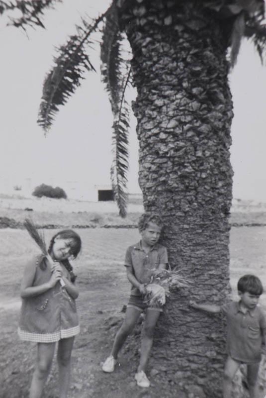 Junto a la palmera II
