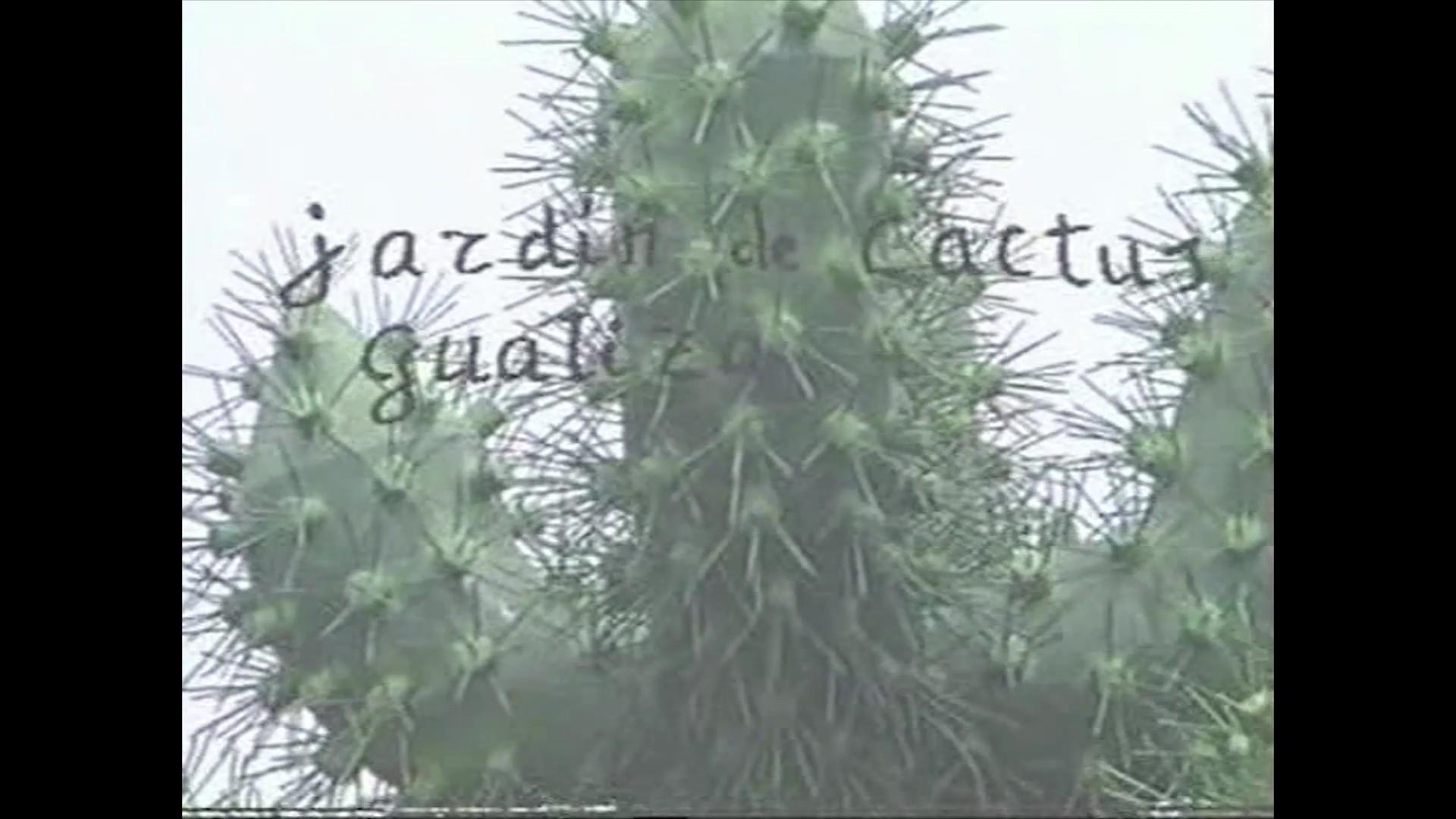 Jardín de Cactus. Guatiza (1990)