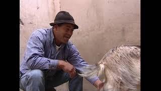 La ganadería en Lanzarote (2006)
